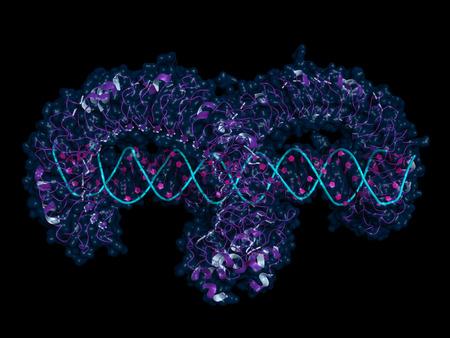 Ectodominio del receptor tipo Toll 3 (TLR3) unido a ARN bicatenario. Modelo de dibujos animados con superficie semitransparente.
