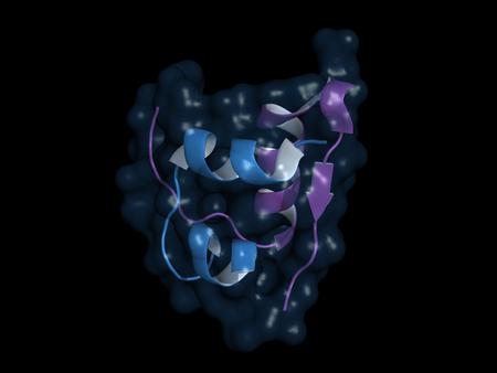 Insulin monomer, cartoon model with semi-transparent surface
