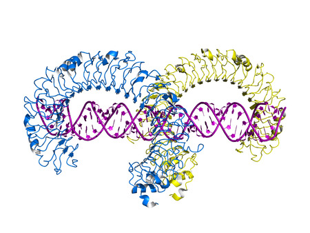 Toll-like receptor 3 (TLR3) ectodomain bound to double-stranded RNA, cartoon model. Stock Photo