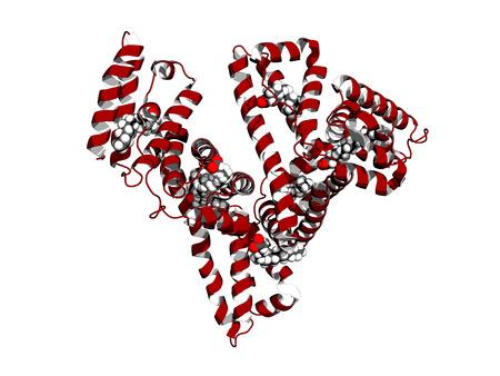 Human serum albumin complexed with stearic acid, cartoon model Stock Photo