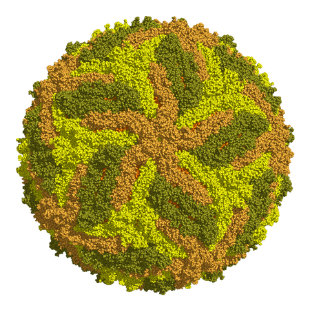 Zika virus capsid, space-filling model.