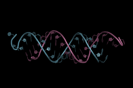 pequeño ARN de interferencia unido a un ARN mensajero, modelo de dibujos animados. Los ARNip son herramientas de interferencia de ARN sintético que se utilizan para inducir la reducción temporal de la expresión de ARNm.