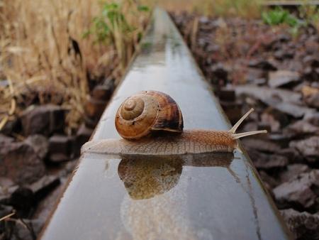 caracol: Un caracol cruzando la línea de ferrocarril