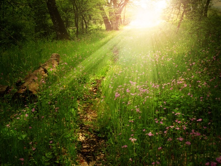 Magical light on a footpath in a green forest photo