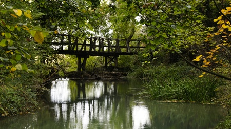 Reflection of a bridge surrounded by green foliage on still water photo