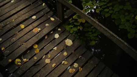 zen like: Yellow fallen leaves on a wooden bridge