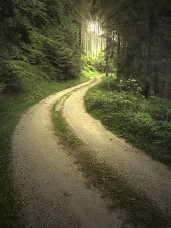 end of road: Winding road in the forest with light pouring through the trees Stock Photo