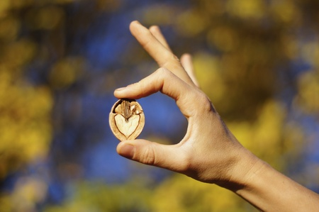 Hand making OK sign with a walnut photo