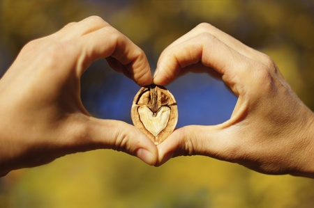 Two hands making heart sign with a heart-shaped walnut photo