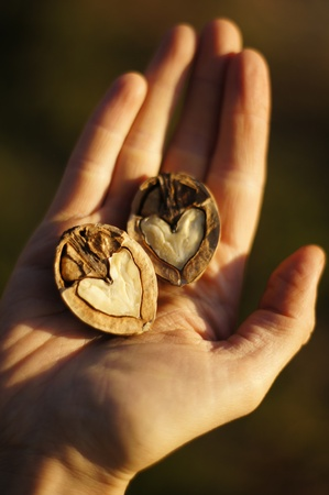 two and a half: Heart shaped nuts on hand Stock Photo
