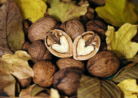 Split heart shaped walnuts ot colorful autumn leaves photo