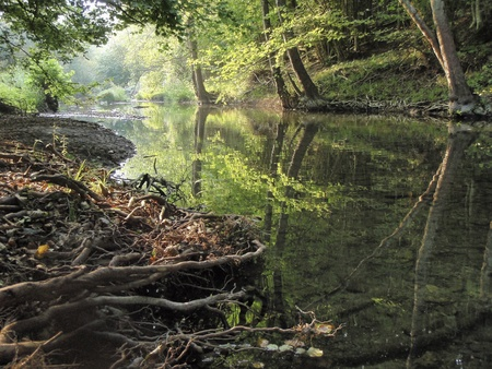 enchanting: Beautiful morning reflections of trees in the river in a lush green forest