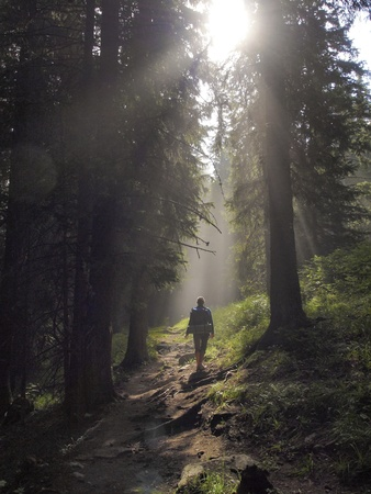 guiding: Female hiker walking under the rays of the morning sun in the mountain forest Stock Photo