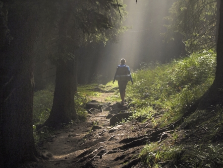 Female hiker walking under the rays of the morning sun in the mountain forest Фото со стока