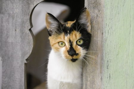 Calico cat with green eyes staring through fence Stock Photo - 11784560