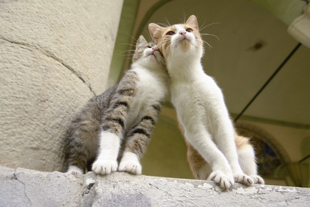 Two kittens sitting together and leaning on eachother as friends Stock Photo - 11784554