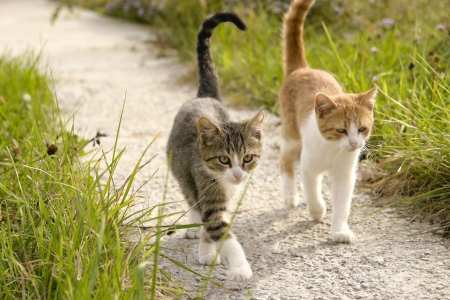 Two kittens going for a walk together in the garden