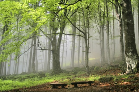 deciduous woodland: Two wooden benches in magical, misty, green forest  Stock Photo