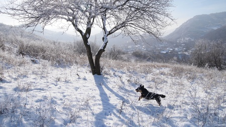 Little dog jumping on snowy hillside with mountainous village backdrop photo