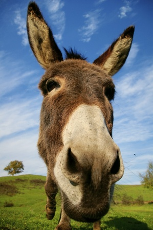 Friendly donkey with sunny natural background Stock Photo - 11975120