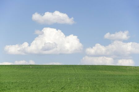 vista: A green field with white fluffy clouds on blue sky