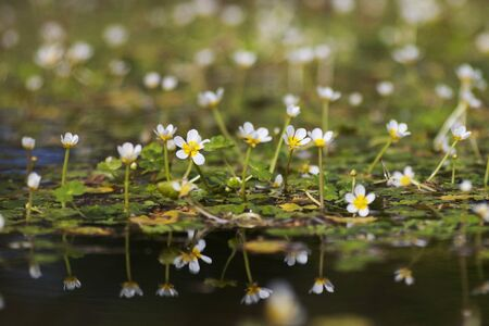 watergarden: A reflection of flowers in the still water of a pond Stock Photo