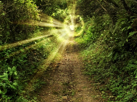 fantasy: Tunnel -like path covered with bushes and trees with light at the end