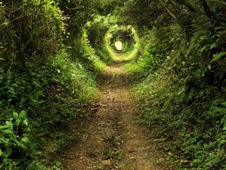 alice au pays des merveilles: Tunnel-comme le chemin couvert de buissons et d'arbres avec de la lumi�re � la fin