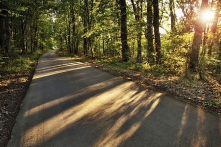 The evening sun throwing long shadows of trees on a peaceful rural road in the forest Stock Photo - 14166198