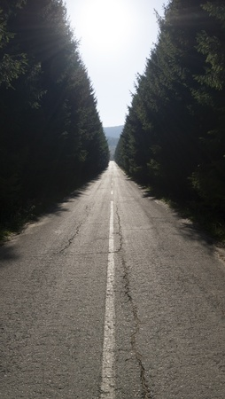 A straight asphalt road disappearing into the distance between lines of trees Stock Photo - 16187841