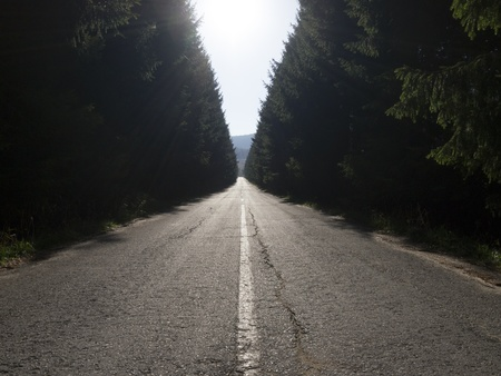 A straight asphalt road disappearing into the distance between lines of trees Stock Photo - 16187900