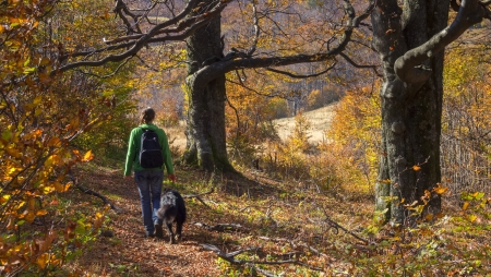 A girl walking with her dog in colorful autumn forest in the mountains