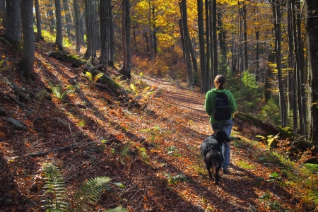 A girl walking her dog in colorful autumn forest in the mountains