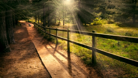 serenity: Dreamy enchanting path in the forest with a bench in the distance and welcoming beams of light shining Stock Photo