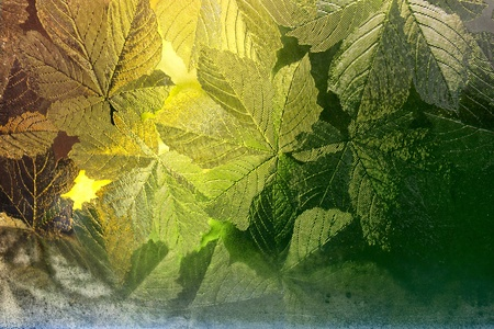 Stained glass window decorated with tree leaves and beautiful golden light coming through Stock Photo
