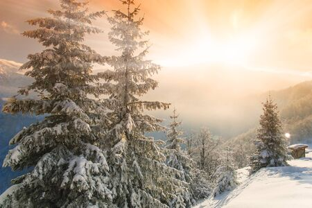 snow covered mountain: Beautiful morning light shining over mountain tops and pine trees covered with snow
