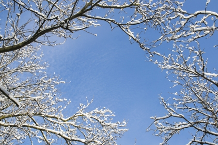 Bare winter branches covered with fresh snow creating a frame against a clear blue sky photo
