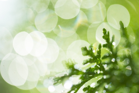 Dreamy bokeh and green branches with dew drops in morning light. photo