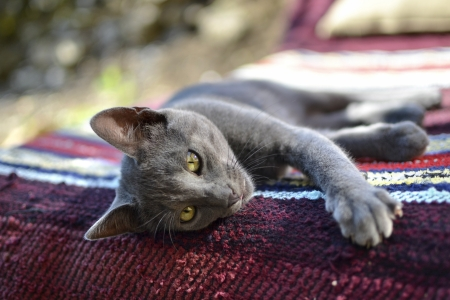 grey rug: A sleepy young grey cat laying on bench covered with colorful rug on a sunny day outside in the garden. Stock Photo