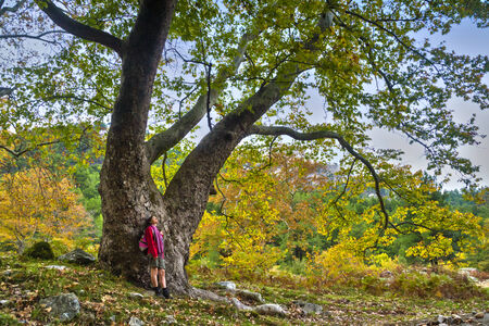 awe: Young tourist woman looking with awe at the majectic big old tree on the island of Thassos, Greece Stock Photo