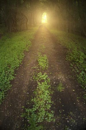 Camino oscuro bosque sombrío con árboles formando un túnel sobre ella y la luz al final. Foto de archivo
