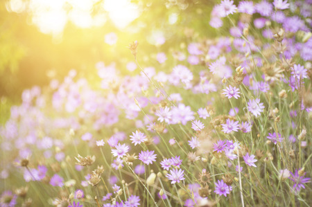 radiant light: Wild flowers in a forest meadow with glow of the setting sun in the background. Stock Photo