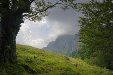 Old trees framing a mountain landscape with meadow and a waterfall falling down from high rocks. photo