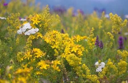 Colorful variety of wild mountain flowers and herbs in bloom. photo