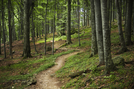 forest path: Windy path going through the forest. Stock Photo
