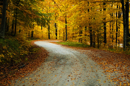 Asphalt road winding through brightly coloured trees in autumn. Stock Photo