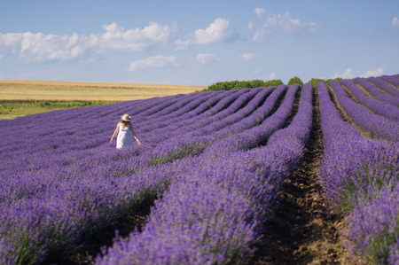 woman in field: Young woman with white dress enjoying the beauty and fragrance of a filed of lavender in bloom.