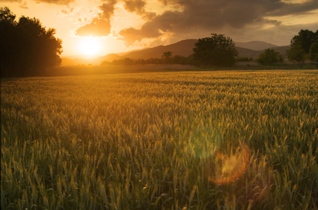 over the horizon: Beautiful golden sunset over fields of barley. Stock Photo
