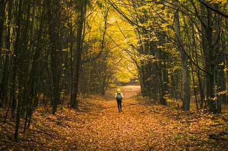 Jeune randonneur marchant dans un sentier dans la forêt couverte de feuilles aux couleurs d'automne lumineux. Banque d'images - 48070253
