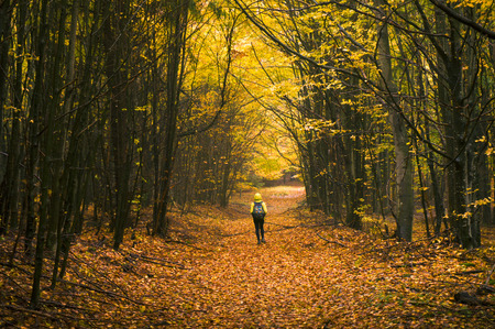 Young hiker walking down a pathway in the forest covered with leaves in bright autumn colours.